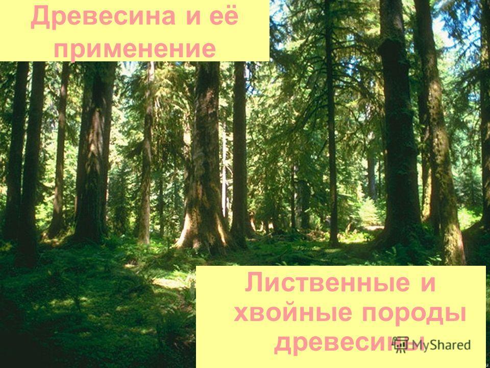 Лиственные и хвойные породы древесины Древесина и её применение