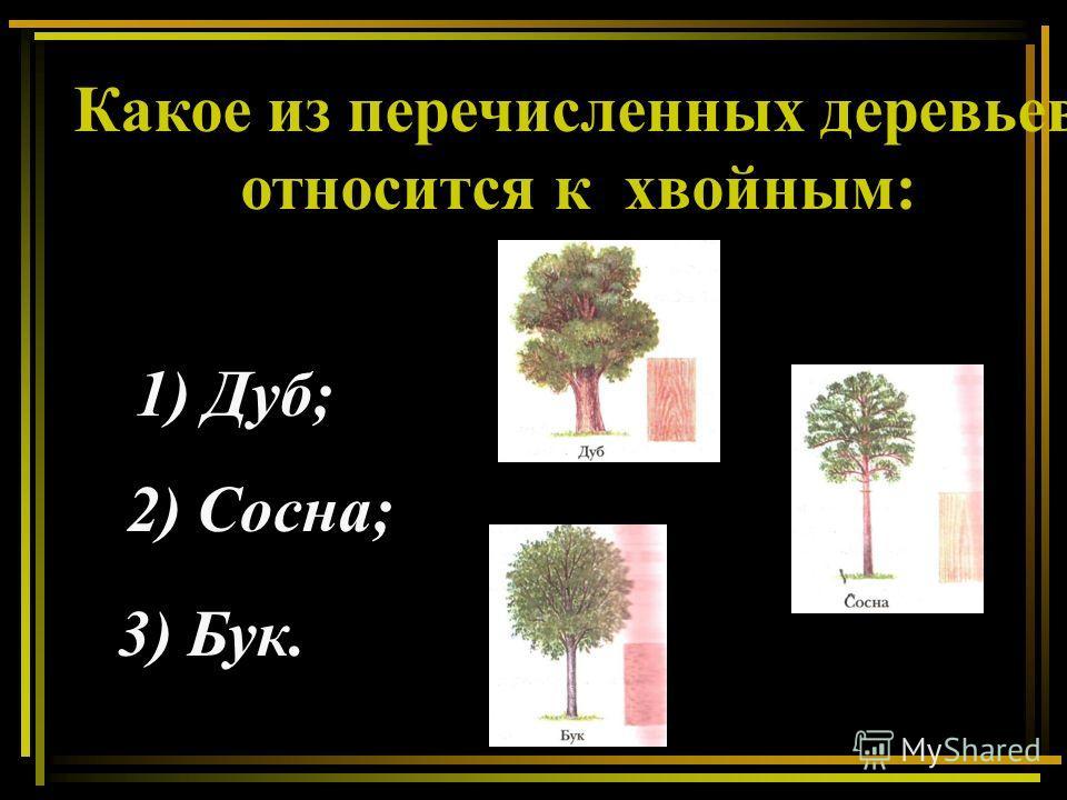 Какое из перечисленных деревьев относится к хвойным: 1) Дуб; 2) Сосна; 3) Бук.