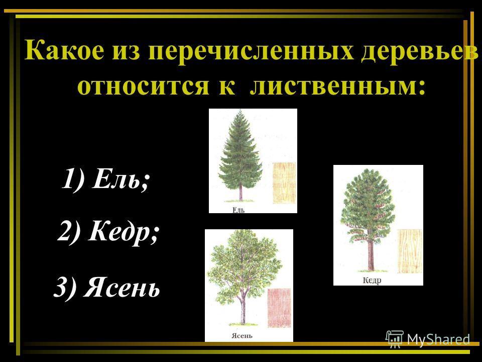 Какое из перечисленных деревьев относится к лиственным: 1) Ель; 2) Кедр; 3) Ясень