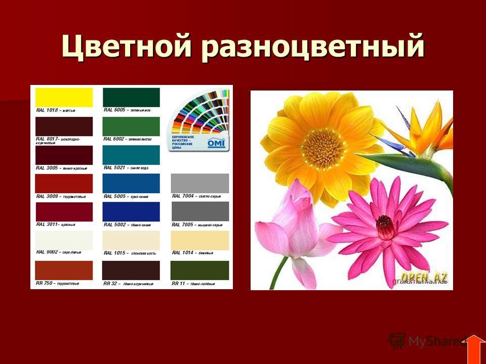 Цветной разноцветный