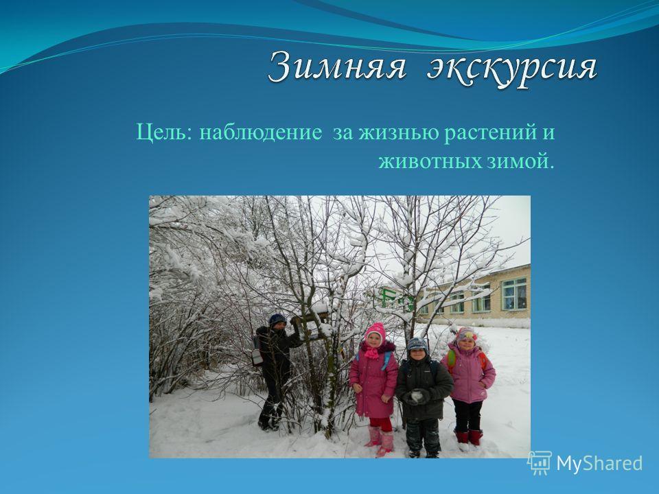 Цель: наблюдение за жизнью растений и животных зимой.