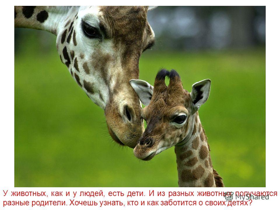 Как звери ухаживают за детёнышами