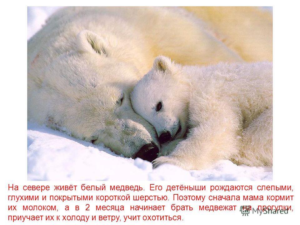 У животных, как и у людей, есть дети. И из разных животных получаются разные родители. Хочешь узнать, кто и как заботится о своих детях?