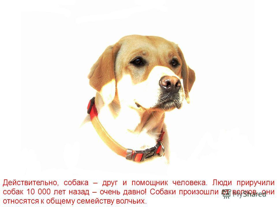 «Собака – друг человека». Ты, наверное, слышал эту фразу. Ни одно животное, кроме собаки, не называл человек своим другом.