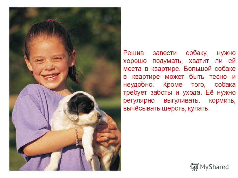 Собаки могут очень сильно отличаться по размеру. Самая маленькая собачка – это чихуахуа, а самая большая – дог.