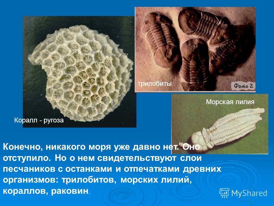 Конечно, никакого моря уже давно нет. Оно отступило. Но о нем свидетельствуют слои песчаников с останками и отпечатками древних организмов: трилобитов, морских лилий, кораллов, раковин. Коралл - ругоза трилобиты Морская лилия