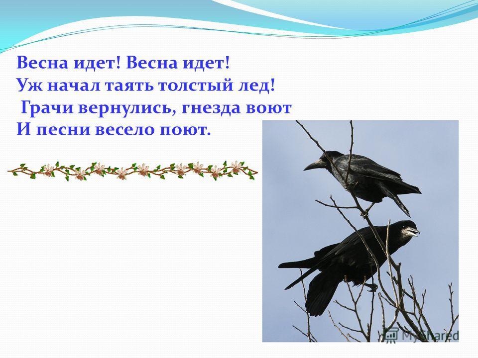 Весна идет! Уж начал таять толстый лед! Грачи вернулись, гнезда воют И песни весело поют.