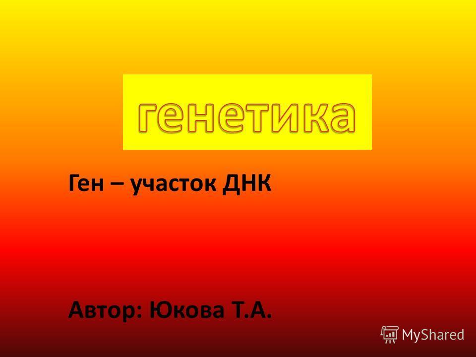 Ген – участок ДНК Автор: Юкова Т.А.