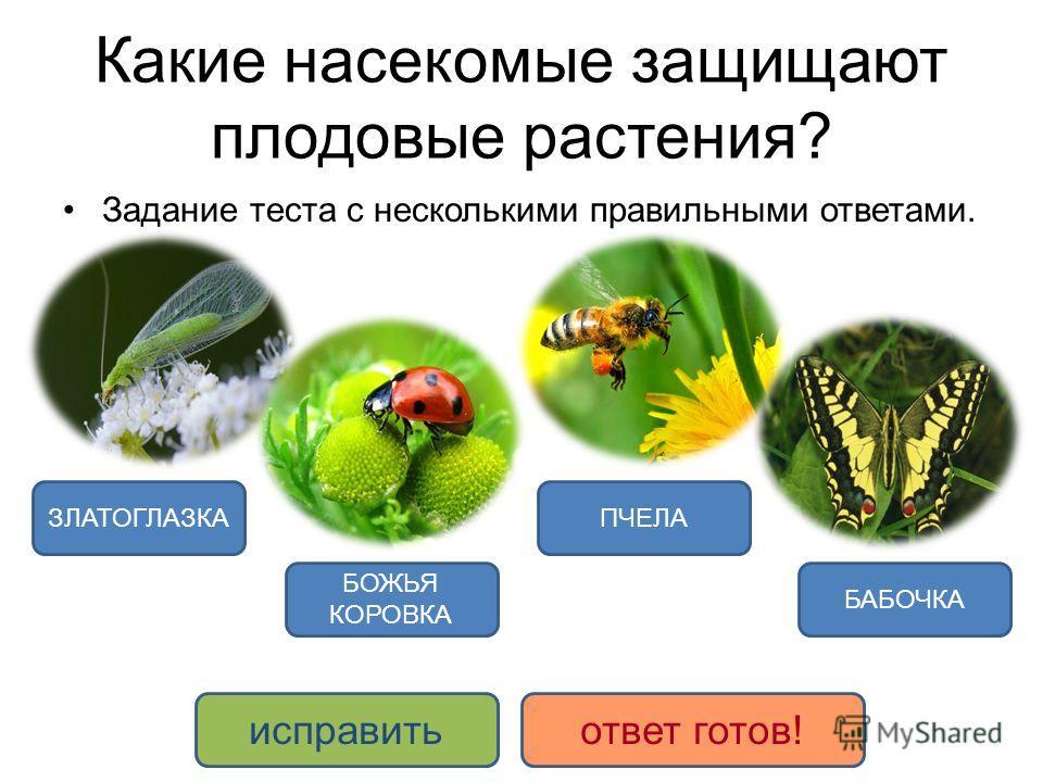 Какие насекомые защищают плодовые растения? Задание теста с несколькими правильными ответами. БОЖЬЯ КОРОВКА ЗЛАТОГЛАЗКА БАБОЧКА ПЧЕЛА исправитьответ готов!