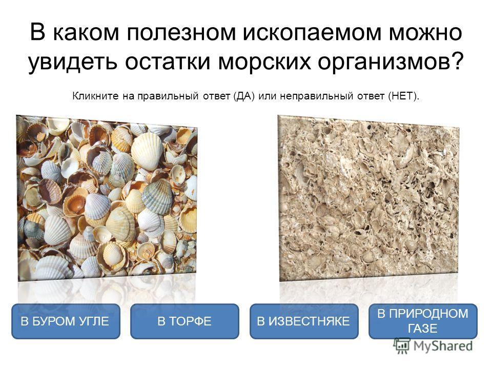В каком полезном ископаемом можно увидеть остатки морских организмов? Кликните на правильный ответ (ДА) или неправильный ответ (НЕТ). В ИЗВЕСТНЯКЕВ ТОРФЕ В ПРИРОДНОМ ГАЗЕ В БУРОМ УГЛЕ