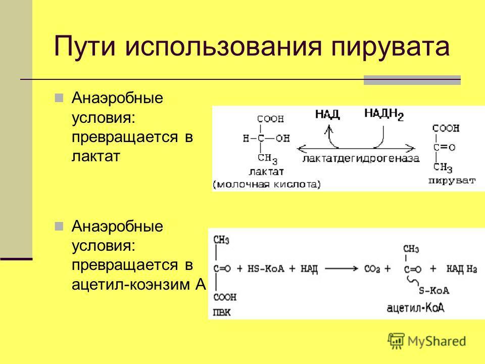 Пути использования пирувата Анаэробные условия: превращается в лактат Анаэробные условия: превращается в ацетил-коэнзим А