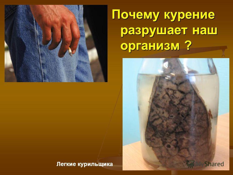Почему курение разрушает наш организм ? Легкие курильщика