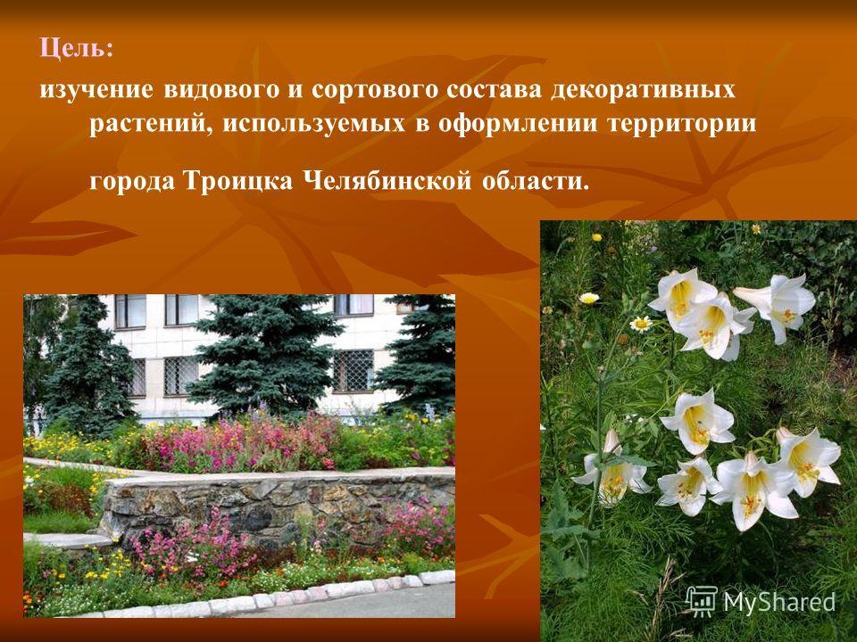 Цель: изучение видового и сортового состава декоративных растений, используемых в оформлении территории города Троицка Челябинской области.