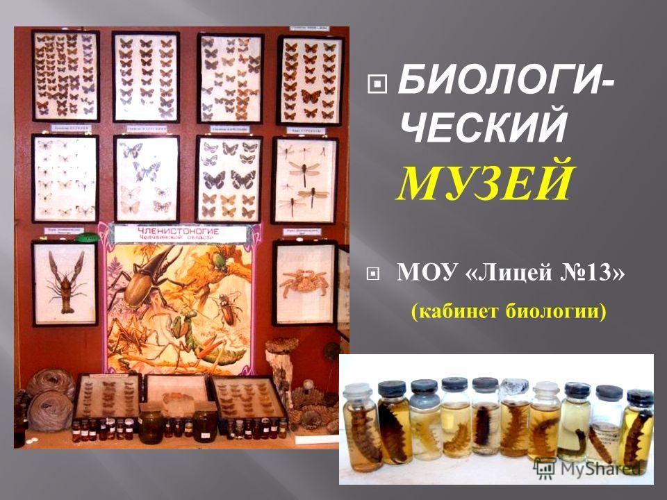 БИОЛОГИ- ЧЕСКИЙ МУЗЕЙ МОУ « Лицей 13» ( кабинет биологии )