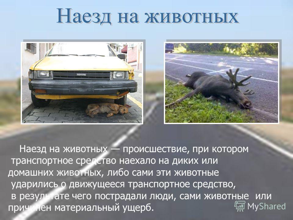 Наезд на животных происшествие, при котором транспортное средство наехало на диких или домашних животных, либо сами эти животные ударились о движущееся транспортное средство, в результате чего пострадали люди, сами животные или причинен материальный