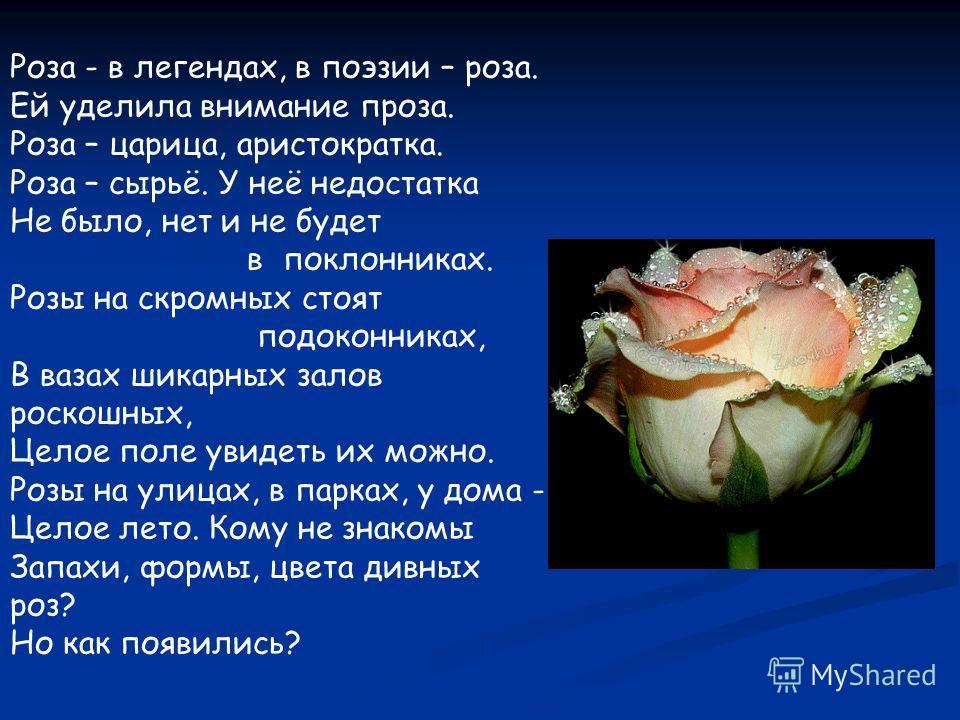Роза - в легендах, в поэзии – роза. Ей уделила внимание проза. Роза – царица, аристократка. Роза – сырьё. У неё недостатка Не было, нет и не будет в поклонниках. Розы на скромных стоят подоконниках, В вазах шикарных залов роскошных, Целое поле увидет