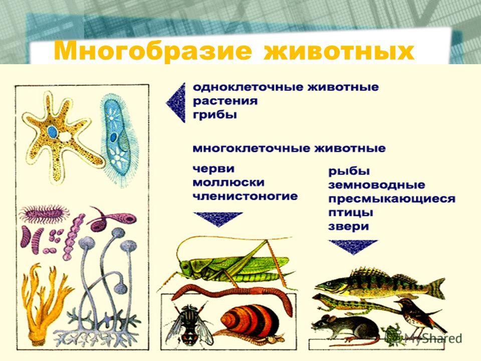 Многобразие животных