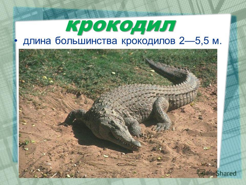крокодил длина большинства крокодилов 25,5 м.