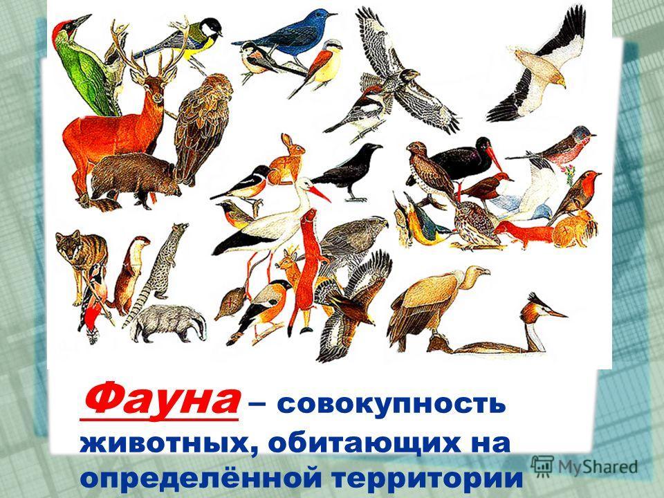 Фауна – совокупность животных, обитающих на определённой территории