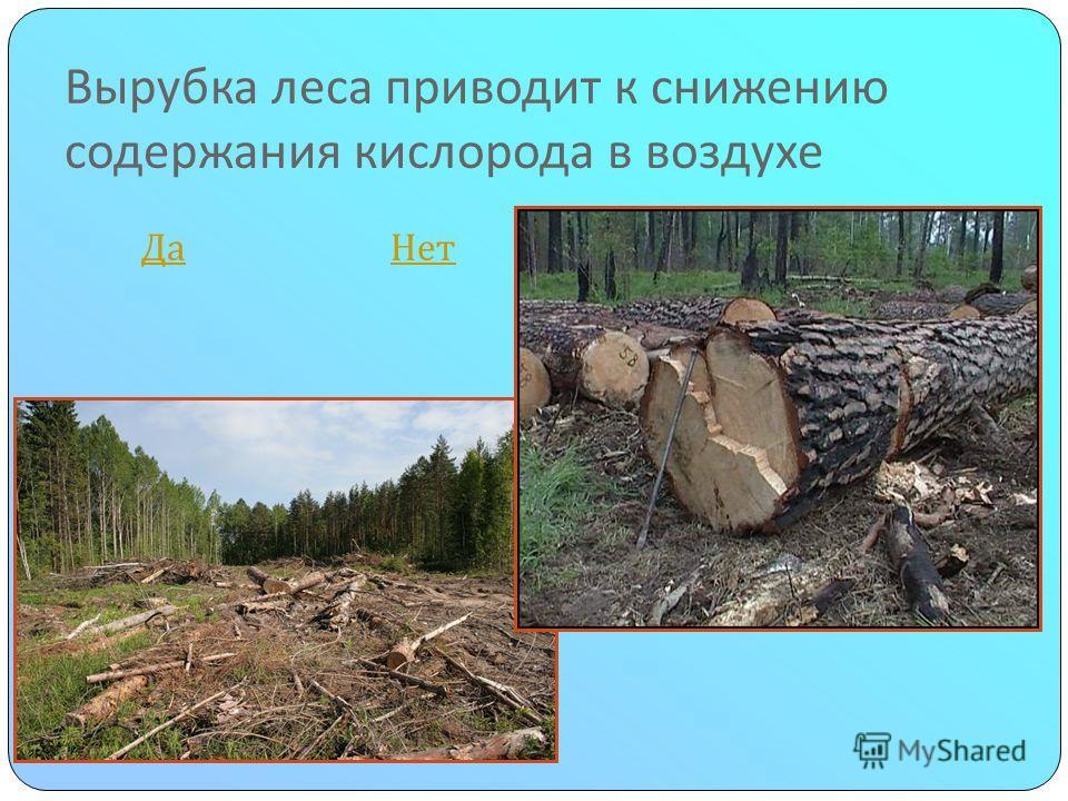 Вырубка леса приводит к снижению содержания кислорода в воздухе Да Нет Да Нет