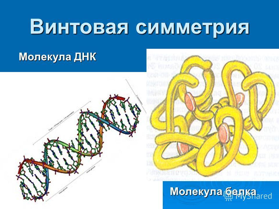 Молекула ДНК Молекула белка