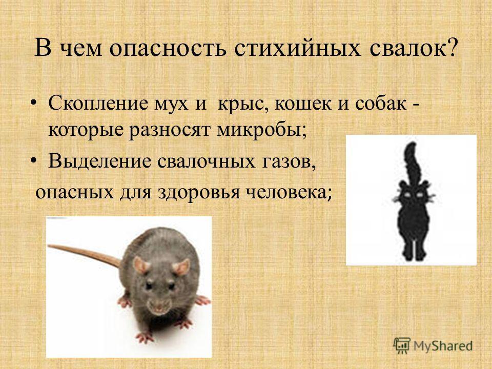 В чем опасность стихийных свалок? Скопление мух и крыс, кошек и собак - которые разносят микробы; Выделение свалочных газов, опасных для здоровья человека ;
