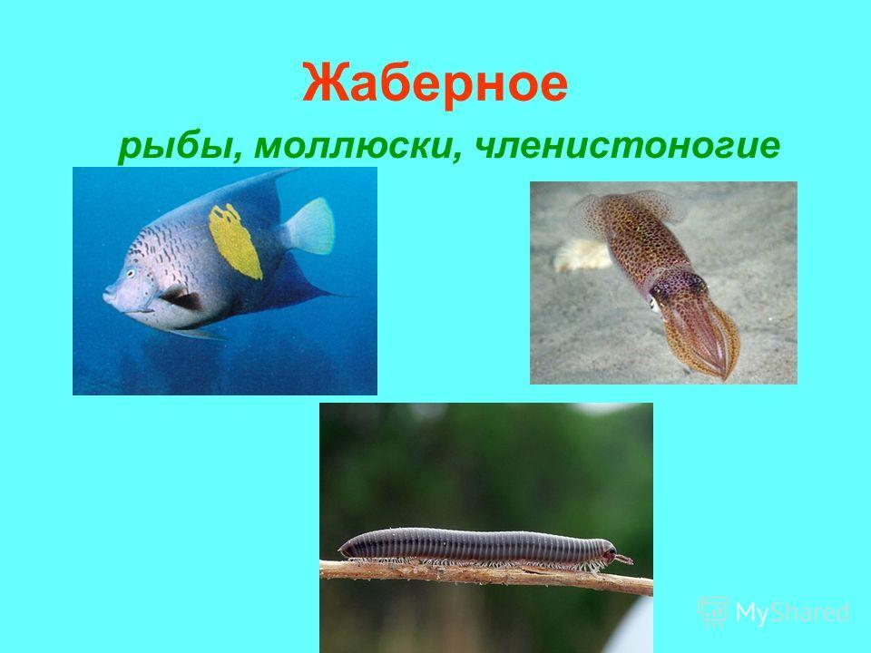 Жаберное рыбы, моллюски, членистоногие
