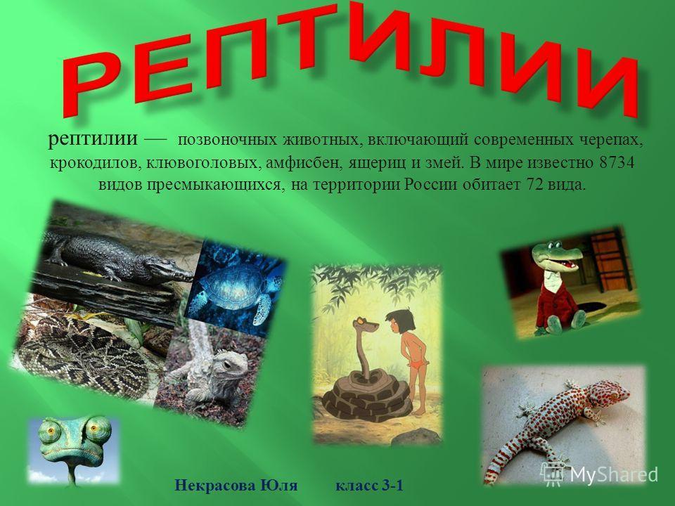 рептилии позвоночных животных, включающий современных черепах, крокодилов, клювоголовых, амфисбен, ящериц и змей. В мире известно 8734 видов пресмыкающихся, на территории России обитает 72 вида. Некрасова Юля класс 3-1