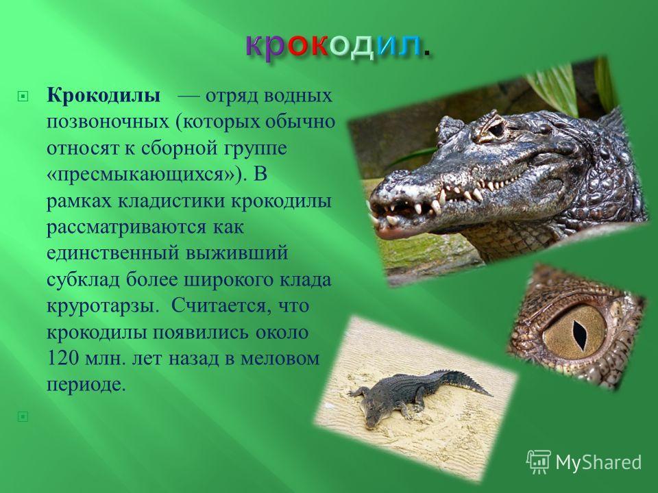 Крокодилы отряд водных позвоночных ( которых обычно относят к сборной группе « пресмыкающихся »). В рамках кладистики крокодилы рассматриваются как единственный выживший субклад более широкого клада круротарзы. Считается, что крокодилы появились окол