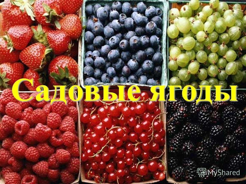 Садовые ягоды Садовые ягоды