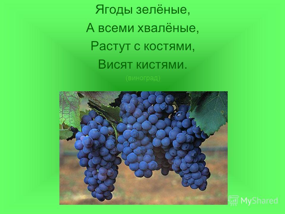 Ягоды зелёные, А всеми хвалёные, Растут с костями, Висят кистями. (виноград)