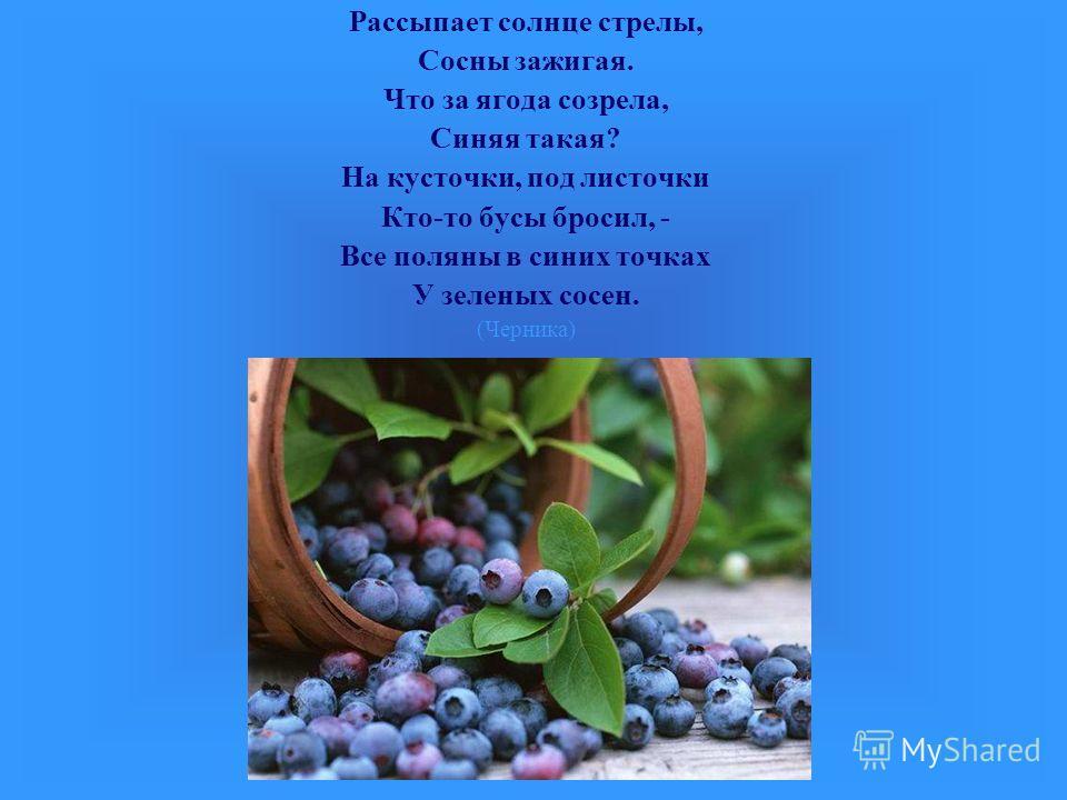 Рассыпает солнце стрелы, Сосны зажигая. Что за ягода созрела, Синяя такая? На кусточки, под листочки Кто-то бусы бросил, - Все поляны в синих точках У зеленых сосен. (Черника)