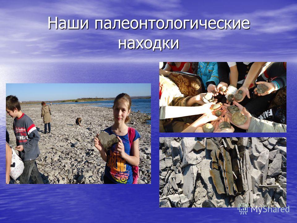 Наши палеонтологические находки