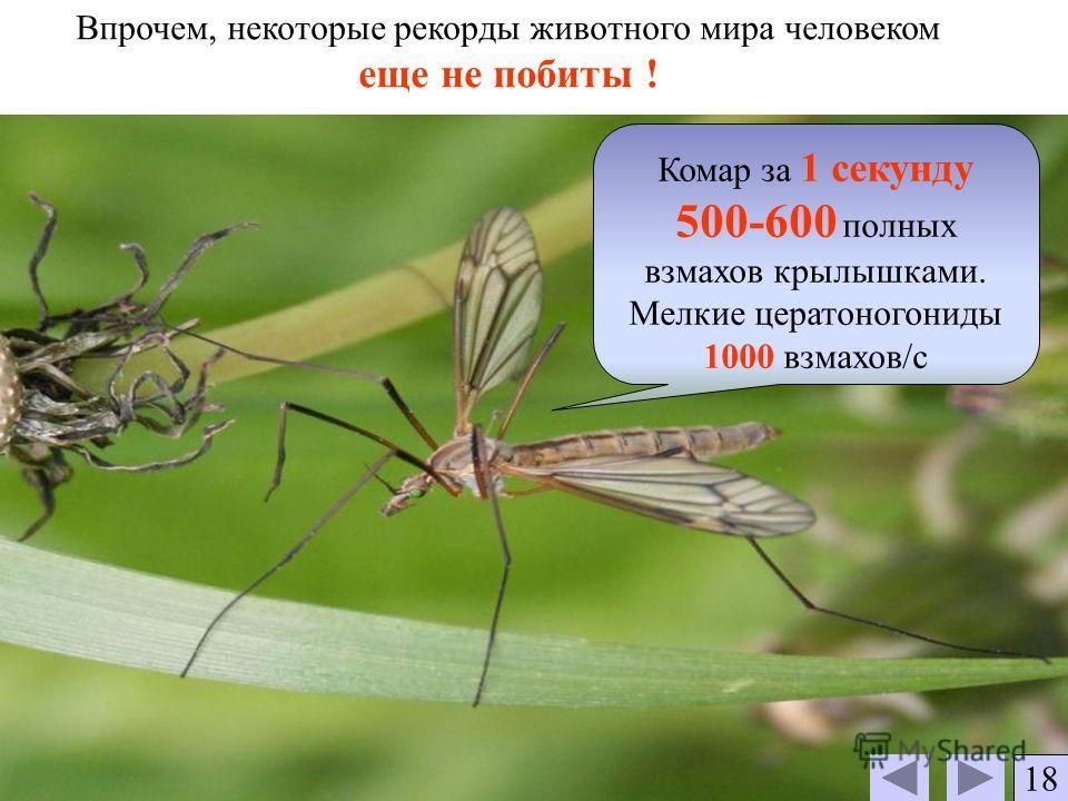 Впрочем, некоторые рекорды животного мира человеком еще не побиты ! Комар за 1 секунду 500-600 полных взмахов крылышками. Мелкие цератоногониды 1000 взмахов/с 18