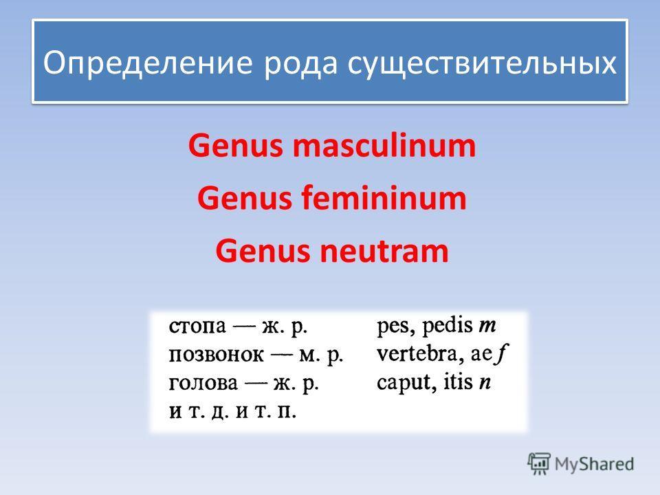Определение рода существительных