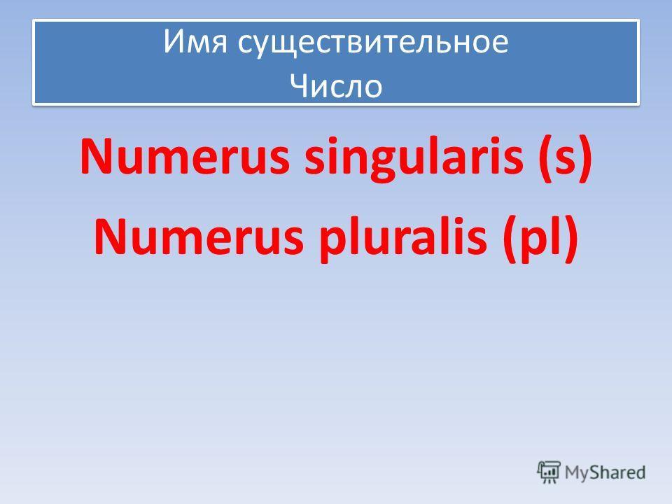 Имя существительное Число Numerus singularis (s) Numerus pluralis (pl)
