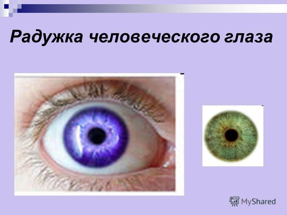 Радужка человеческого глаза