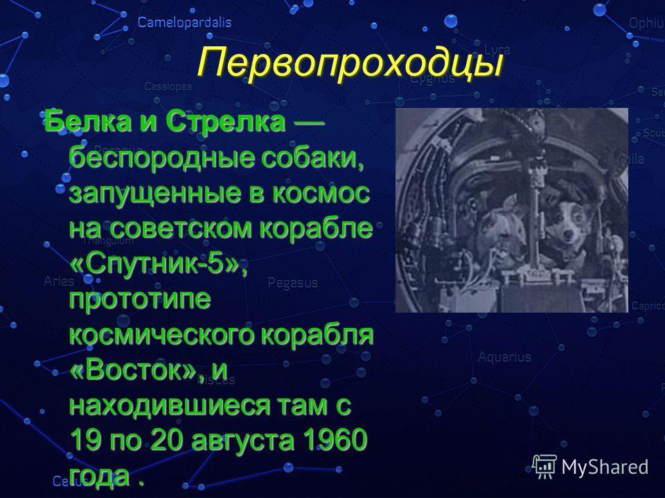 Первопроходцы Белка и Стрелка беспородные собаки, запущенные в космос на советском корабле «Спутник-5», прототипе космического корабля «Восток», и находившиеся там с 19 по 20 августа 1960 года.