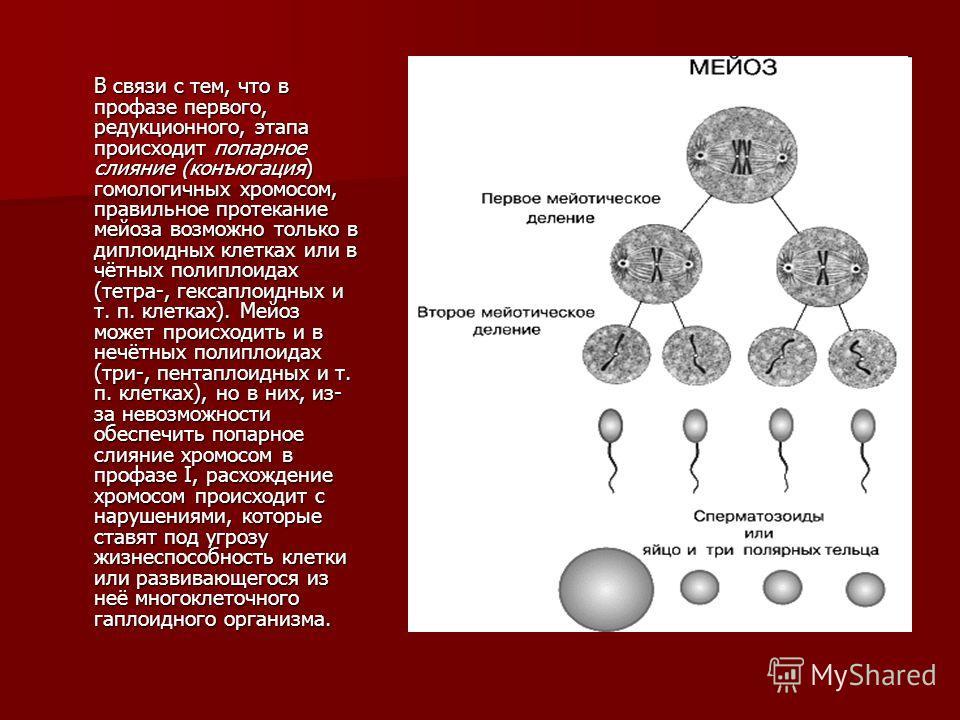 В связи с тем, что в профазе первого, редукционного, этапа происходит попарное слияние (конъюгация) гомологичных хромосом, правильное протекание мейоза возможно только в диплоидных клетках или в чётных полиплоидах (тетра-, гексаплоидных и т. п. клетк
