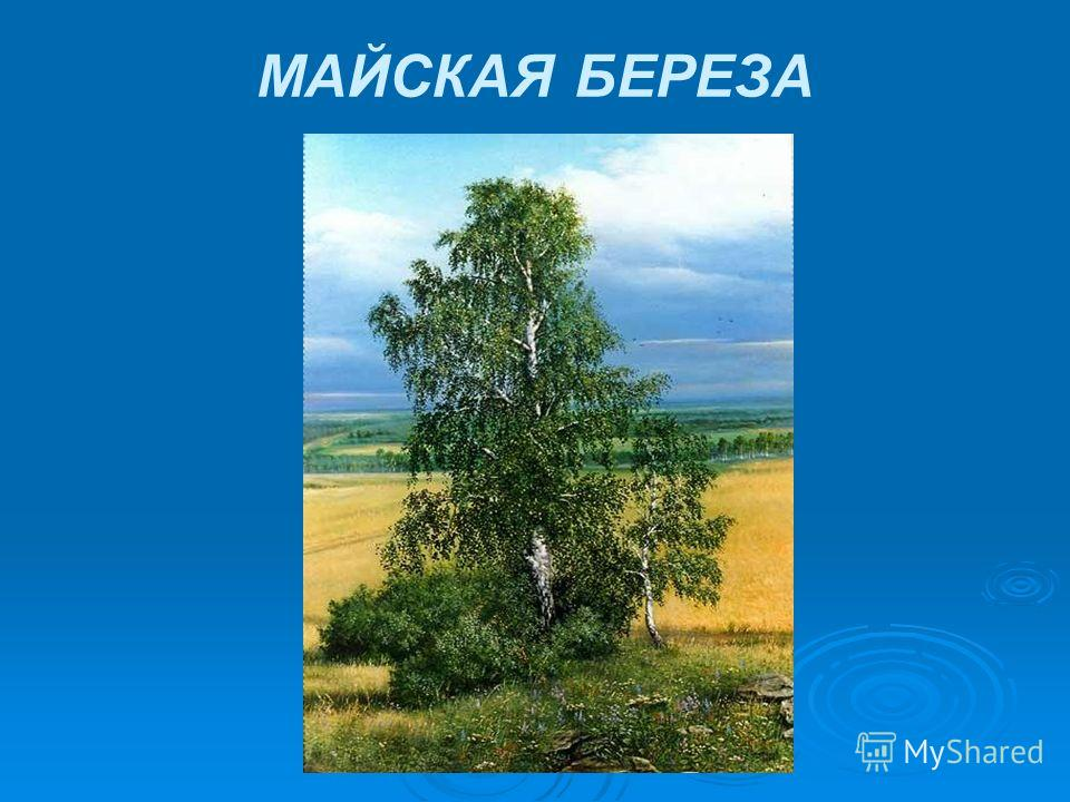 МАЙСКАЯ БЕРЕЗА
