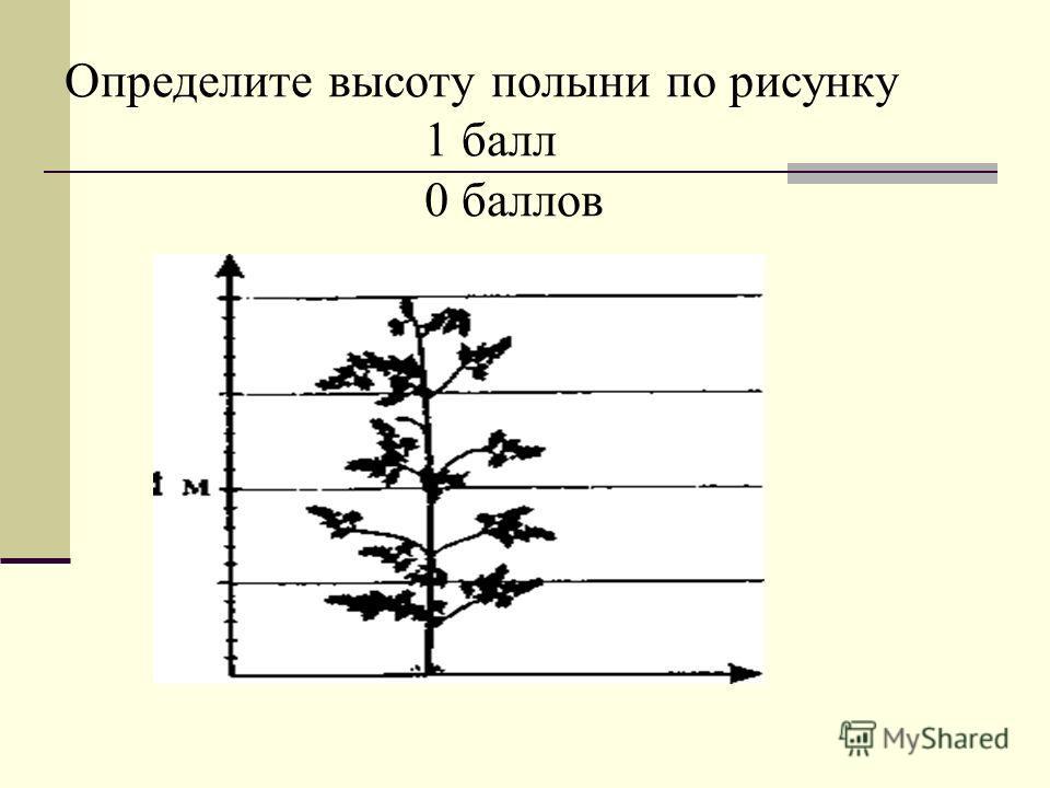 Определите высоту полыни по рисунку 1 балл 0 баллов