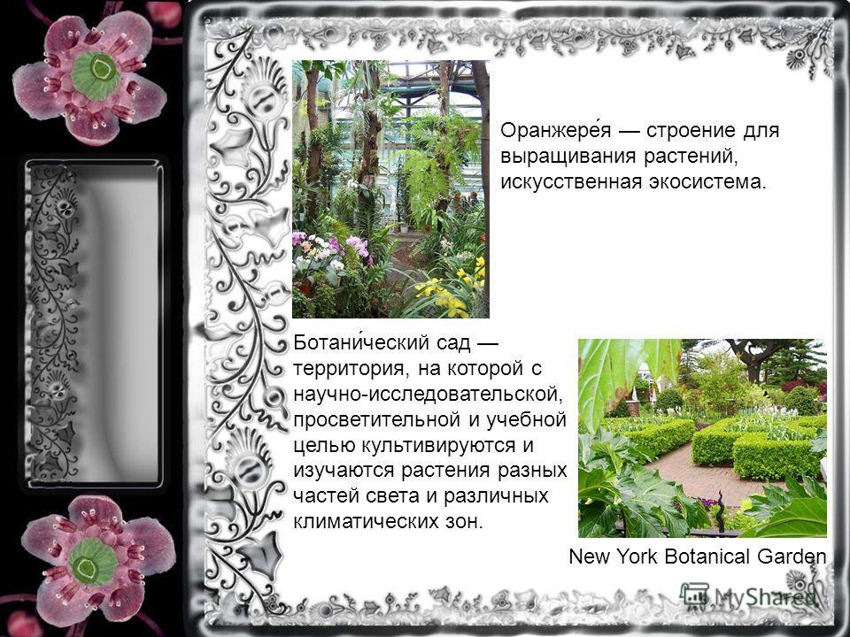 New York Botanical Garden Оранжере́я строение для выращивания растений, искусственная экосистема. Ботани́ческий сад территория, на которой с научно-исследовательской, просветительной и учебной целью культивируются и изучаются растения разных частей с