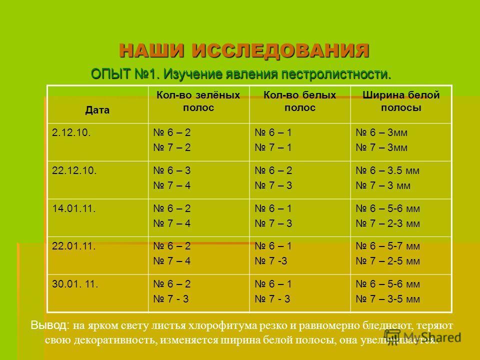 НАШИ ИССЛЕДОВАНИЯ ОПЫТ 1. Изучение явления пестролистности. Дата Кол-во зелёных полос Кол-во белых полос Ширина белой полосы 2.12.10. 6 – 2 7 – 2 6 – 1 7 – 1 6 – 3мм 7 – 3мм 22.12.10. 6 – 3 7 – 4 6 – 2 7 – 3 6 – 3.5 мм 7 – 3 мм 14.01.11. 6 – 2 7 – 4