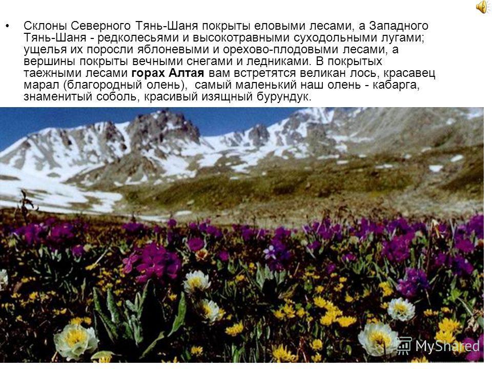 Склоны Северного Тянь-Шаня покрыты еловыми лесами, а Западного Тянь-Шаня - редколесьями и высокотравными суходольными лугами; ущелья их поросли яблоневыми и орехово-плодовыми лесами, а вершины покрыты вечными снегами и ледниками. В покрытых таежными