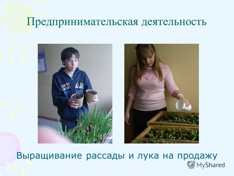 Предпринимательская деятельность Выращивание рассады и лука на продажу