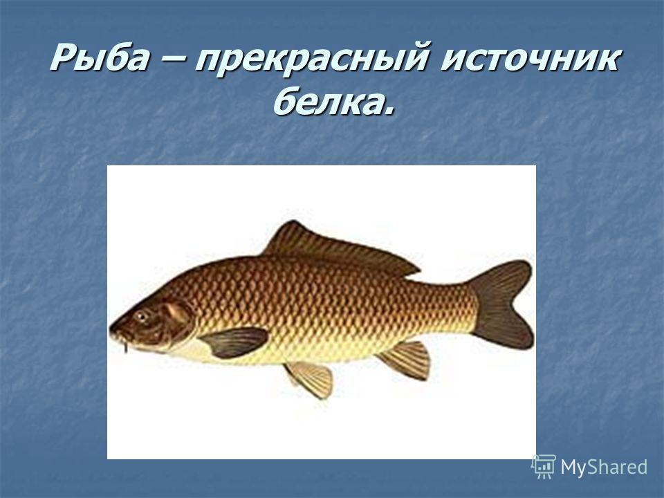 Рыба – прекрасный источник белка.