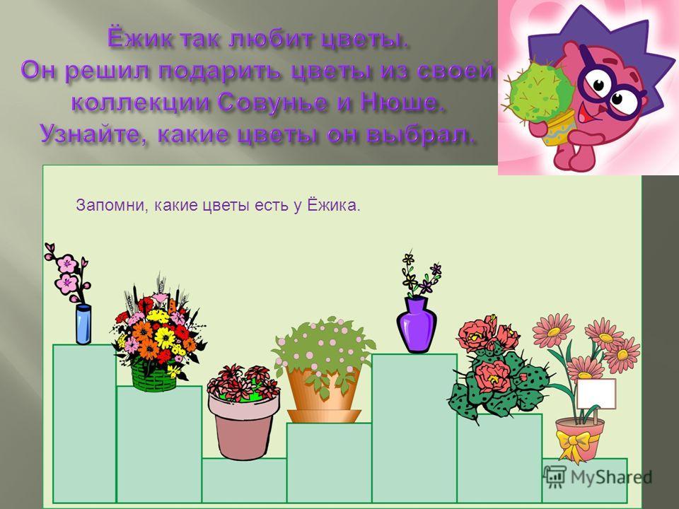 Запомни, какие цветы есть у Ёжика.