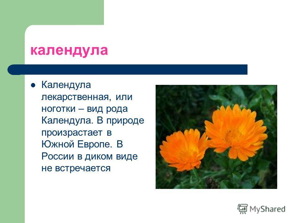 календула Календула лекарственная, или ноготки – вид рода Календула. В природе произрастает в Южной Европе. В России в диком виде не встречается