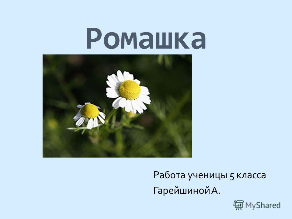 Ромашка Работа ученицы 5 класса Гарейшиной А.