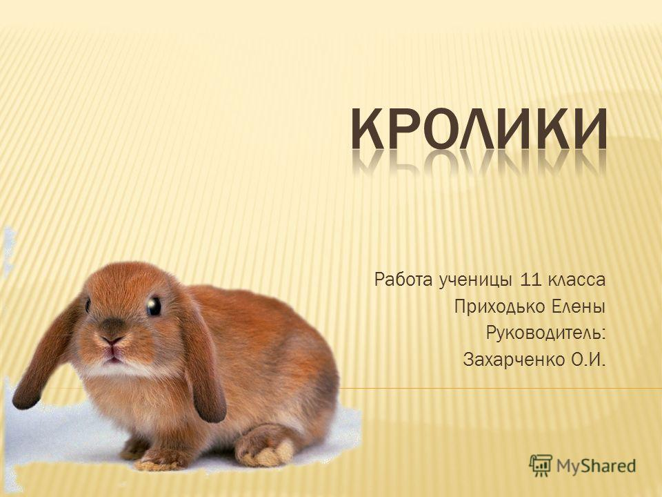 Работа ученицы 11 класса Приходько Елены Руководитель: Захарченко О.И.